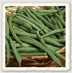 Tenderette Heirloom Snap Bush Bean Seed