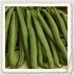 Top Crop Heirloom Snap Bush Bean Seed
