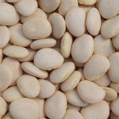 Henderson Bush Lima Bean Seed