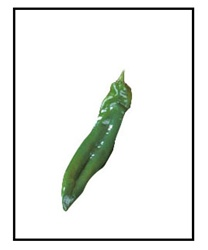 Big Chile F1 Mild Pepper Plant