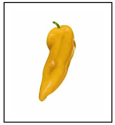 Corno di Toro Yellow Sweet Pepper Plant
