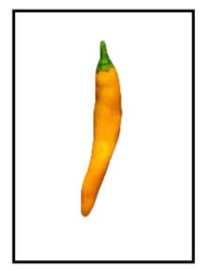 Costeno Amarillo Pepper