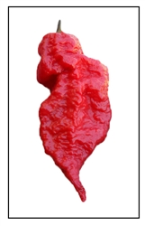 Jay's Red Ghost Scorpion Pepper