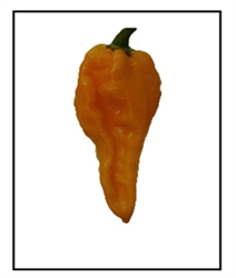 Naga Dorset Orange Pepper