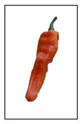 Chilhuacle Amarillo Pepper