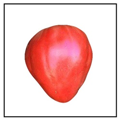 Oxheart Red Tomato
