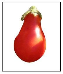 Red Fig Tomato