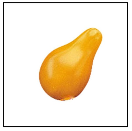 Yellow Pear Tomato Plants For Sale Online Yellow Pear