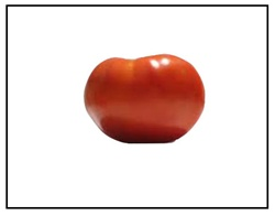 Champion II Tomato For Sale Online