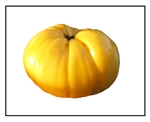 Giant Belgian Yellow Tomato