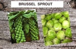 Garden Vegetable Plants For Sale Online Buy Spring Or Fall Vegetable Plants