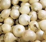 White Ebenezer Onion Sets 1/2 lb. Bulbs