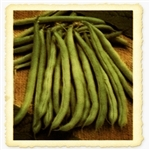Blue Lake 274 Heirloom Bush Bean Seed