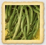 Derby Snap Bush Bean Seed