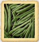 Greencrop Heirloom Bush Bean Seed