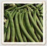 Strike Heirloom Bush Bean Seed