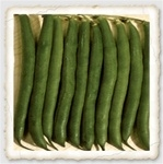 Stringless Green Pod Heirloom Bush Bean Seed