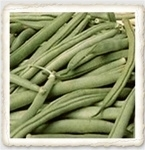 Tendergreen Hierloom Snap Bush Bean Seed