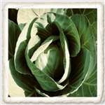 "<SPAN style=""FONT-FAMILY: Arial Black; COLOR: #004500; FONT-SIZE: 14pt"">Charleston Wakefield Cabbage Seed</SPAN>"