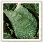 "<SPAN style=""FONT-FAMILY: Arial Black; COLOR: #004500; FONT-SIZE: 14pt"">Jersey Wakefield Cabbage Seed</SPAN>"