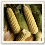 Incredible Sweet Corn