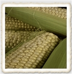 Silver King Sweet Corn Seed