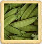 Dwarf Gray Sugar Snow English Pea Seed