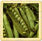 Green Arrow English Pea Seed