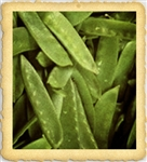 Sugar Snap English Pea Seed
