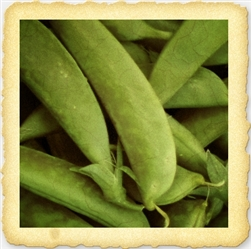 Wando English Pea