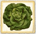 Buttercrunch Lettuce Seed