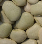 Cangreen Bush Lima Bean Seed