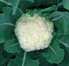 Snow Crown Cauliflower Plants
