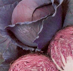 Red Acre Cabbage Plants