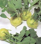 Garth's White Vienna Kohlrabi Plants