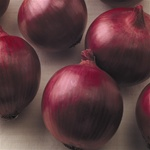 Red Wing Onion Plants:Long-Day