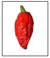 Bhut Jolokia rough/wrinkled pepper