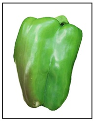 Chinese Giant Bell Pepper Plant