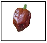 Habanero Chocolate Pepper