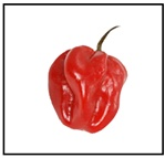 Habanero Red Pepper