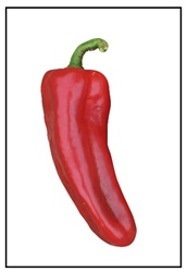 Marconi italian Red Sweet Pepper Plant