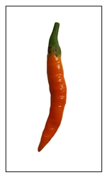 Orange Thai Pepper
