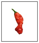 Peter Red Pepper