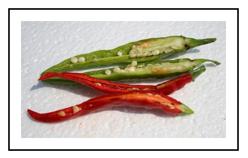 Ring Of Fire Pepper Reviews