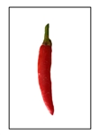 Rooster Spur Pepper