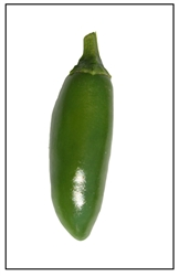 Serrano Chili Pepper