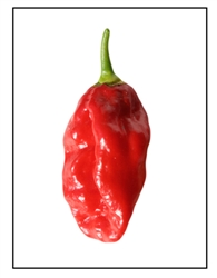 Devil's Tongue Red Pepper