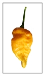 Bhut Jolokia Yellow Ghost Pepper