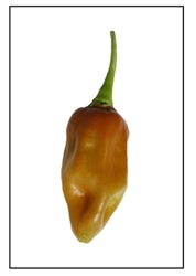 Habanero Black Pepper