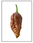 Bhut Jolokia Chocolate Ghost Pepper